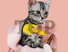 ノミ駆除器(犬・猫ノミ駆除)