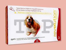 レボリューション 中型犬用10kg~20kg